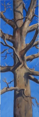 Late Fall Oak